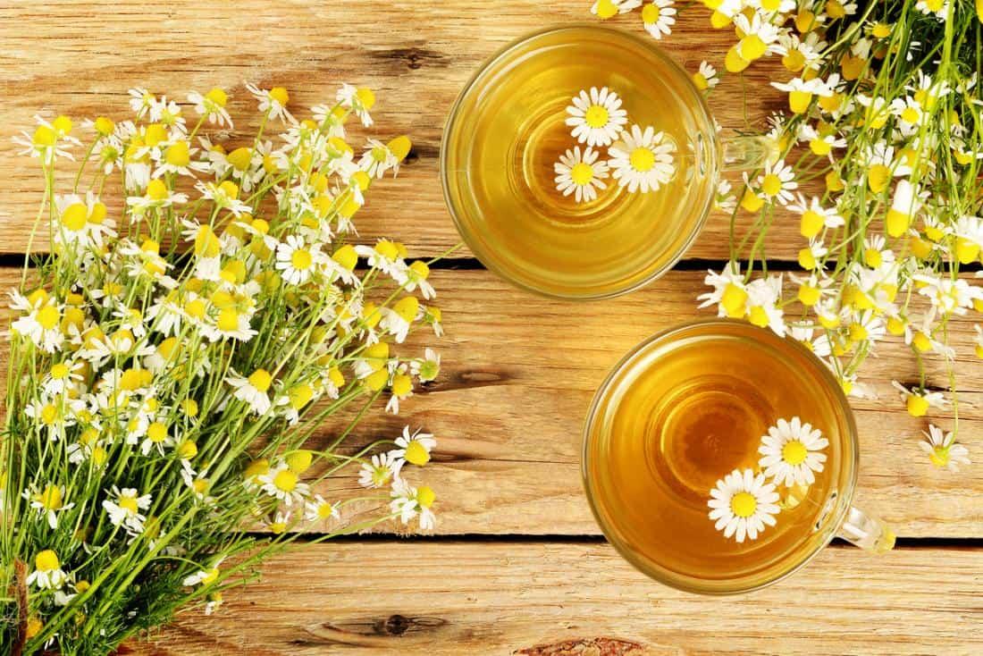 قناع العسل مع البابونج لبشرة نضرة
