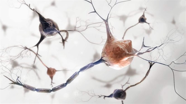 يعزز الكرفس صحة الجهاز العصبي