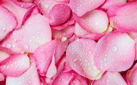 طريقة تحضير ماء الورد بنفسك في المنزل